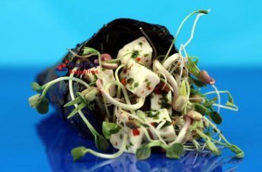 Nori Tofu Wrap with Homegrown Bean Sprouts
