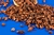 Organic Raw Cacao Nibs (1kg) - Sussex WholeFoods
